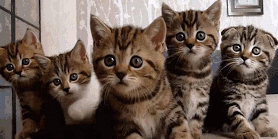 Chats mignons