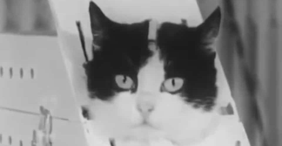 Chatte noire YouTube